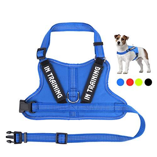 NOYAL in Training Dog Harness