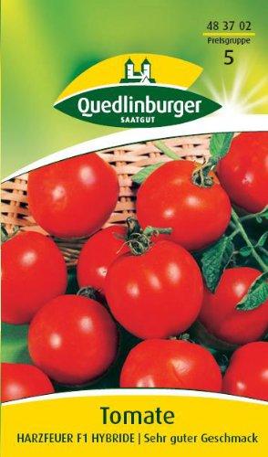 Tomate, Harzfeuer F1