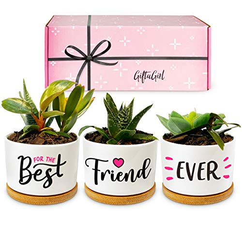 GIFTAGIRL BFF Friend Gifts for Women - Our Classy Best Friend Ever Succulent Pots are Pretty Best Friend Birthday Gifts for Women. They're Also Ideal BFF Gifts for Women, or Bestie Gifts for Wome...