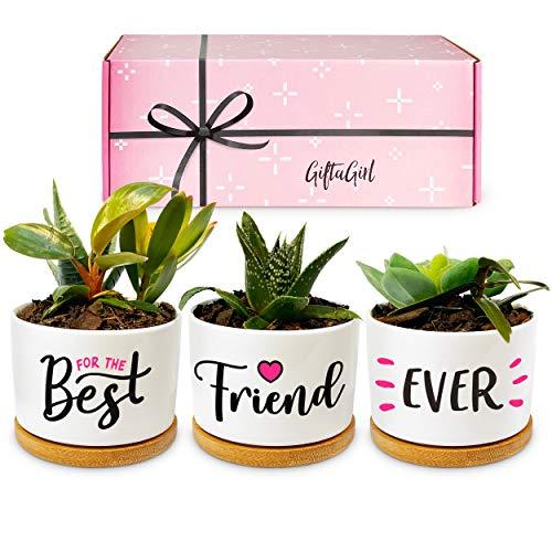 Best Friend Forever Succulent