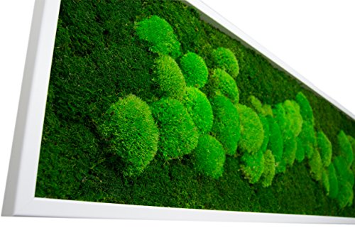 Moosbild mit 50% Kugelmoos und 50% Flachmoos konserviert Maße: 140 x 40 cm mit Vollholzrahmen in schwarz oder weiß (weiß) Echtes Natur Moos Wald Wanddeko Wandbilder Natürlich konserviertes Moss