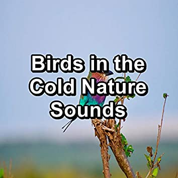 Birds in the Cold Nature Sounds