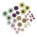 YANODA Plant For Decoration 30 unids/Set Plantas secas de Flores secas prensadas for Resina Colgante de Collar de Resina epoxi artesanía Accesorios de Bricolaje (Color : Random Send)