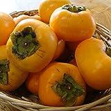 【予約】山形産 庄内柿(しょうないがき) 35玉前後約5キロガス脱渋