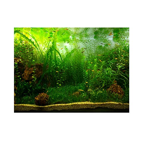 Aquarium Background Fish Tank Decorations Pictures PVC Adhesive Poster Water Grass Style Backdrop Decoration Paper Cling Decals Sticker(7630cm)