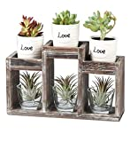 J JACKCUBE DESIGN - Rustic Wood Decorative Plant Holder Stand, Potted Plants for Succulent/Cactus Display Rack Indoor Décor for Dining Table Living Room - MK586B