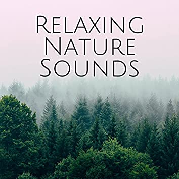 Relaxing Nature Sounds: Relaxation Study Time, Help to Sleep, Power to Calm Down