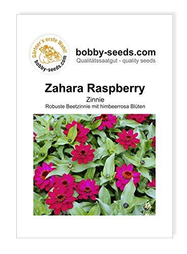 Bobby-Seeds Zinnien Samen Zinnie Zahara Raspberry Portion