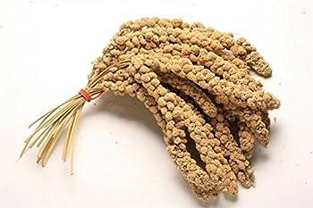 Grappes de millet à accrocher, haute qualité, pour oiseaux, canaris, perruches, 1kg