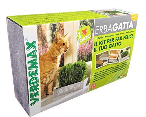 Todo Cultivo Hierba para Gatos. En Kit de plantación (semilla, Tierra y Maceta). Hierba gatera