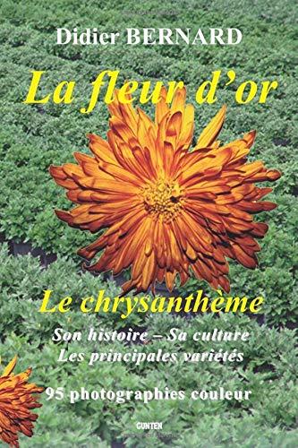 La fleur d'or le chrysanthème