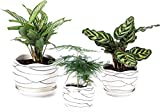 3 Pack Ceramic Flower Plant Pot ...