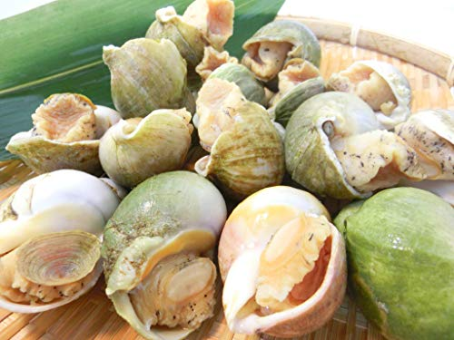 生食用 殻付き ボイル つぶ貝 1kg Mサイズ (1粒が約60gから80g) 冷凍・殻付つぶ貝1kg・