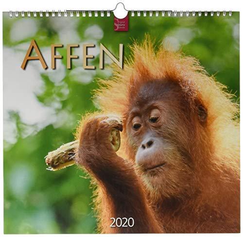 Affen: Original Stürtz-Kalender 2020 - Mittelformat-Kalender 33 x 31 cm
