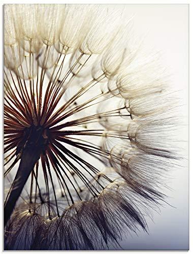 Artland Glasbilder Wandbild Glas Bild einteilig 60x80 cm Hochformat Natur Botanik Blumen Pusteblume Blüten Frühling Modern T4RE