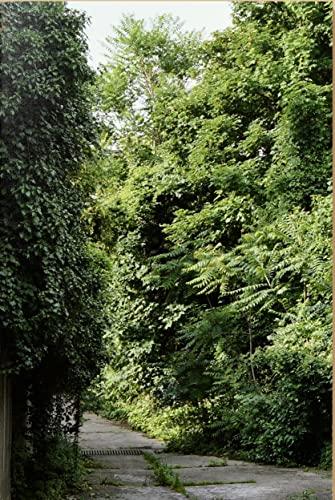Ailanthus altissima: Un inventaire photographique sur le développement spontané des ailantes dans l'espace urbain