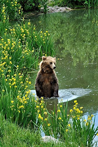 Brown Bear in a Lake Journal: 150 Page Lined Notebook/Diary