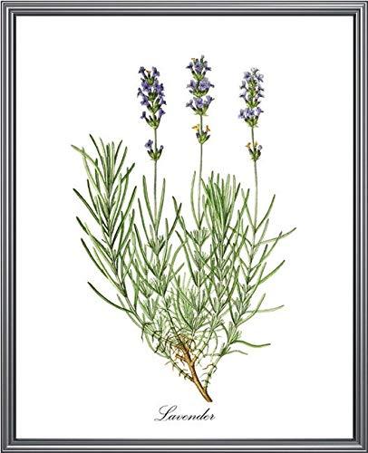Lavendel Printable Vintage Kruid Illustratie Kruiden Botanische Print Muur Kunst