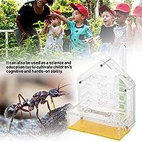 透明なアクリルアリの別荘、耐久性のある教育玩具アリ農場、子供のための誕生日プレゼントアリの餌やり