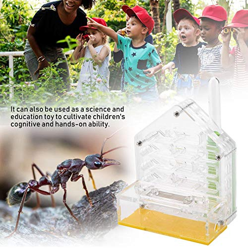 WNSC Bildung Spielzeug Ameisennest, Ameisenfarm, Acryl Langlebig für die Ameisenfütterung