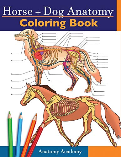 Horse + Dog Anatomy Coloring Book: 2-in-1 Compilation | Incredibly Detailed Self-Test Equine & Canine Anatomy Color workbook | Perfect Gift for ... Students, Animal Lovers & Adults
