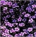 """Parte della gamma """"Difference is JustSeed"""". I prodotti originali Just Seed sono forniti direttamente da JustSeed UK. Professional Seed Company Defra Registrato 7291, Organic Registration AP23164 Tutti i semi sono confezionati ed etichettati con infor..."""