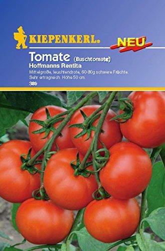 Tomate Buschtomate Hoffmanns Rentita