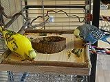 Sitzbrett mit Kokosschale Futternapf zum Herausnehmen - 3