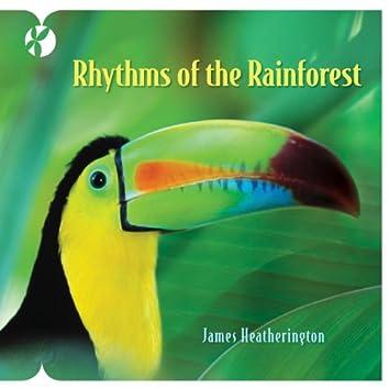 Rhythms of the Rainforest