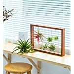 Mkono Air Plant Frame Tillandsia Wall Display, 7 7/8 Inch, 16 Inch 11 A wonderful way to display your tillandsias. This frame allows air and light to pass through. With hooks at the back, easy to hang anywhere, wall, windows or outdoor.