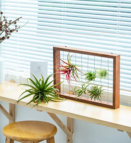 Mkono Air Plant Frame Tillandsia Wall Display, 7 7/8 Inch, 16 Inch 4 A wonderful way to display your tillandsias. This frame allows air and light to pass through. With hooks at the back, easy to hang anywhere, wall, windows or outdoor.