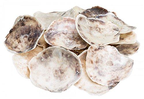 NaDeco Placuna Placenta 1 kg Placuna Ephippium grobe Perlmuttscheiben Sattelfenstermuschel Perlmuttplatten Maritime Dekoration