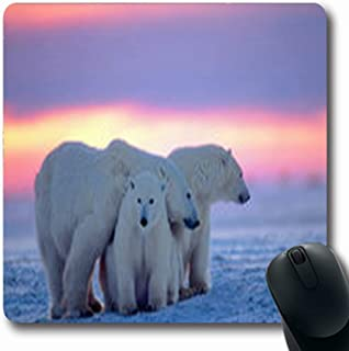 Pandarllin Mousepads Wildlife Polar Bear Her Canada Cub Canadian Arctic Predator Oblong Shape 7.9 x 9.5 Inches Oblong Gaming Mouse Pad Non-Slip Rubber Mat