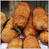Pinkdose - 5 semillas de fruta de Jackfruit de Japón frescas gigantes, frutas, bonsái, maceta de bonsái, semillas grandes de floración: 6