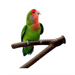 Natural Wood Parrot Bird Fork Stand Perch Y Shape Stand Wooden Branches Birdcage Stands Paw Grinding Toy With Exquisite Bell