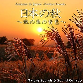 日本の秋 ~秋の虫の音色~