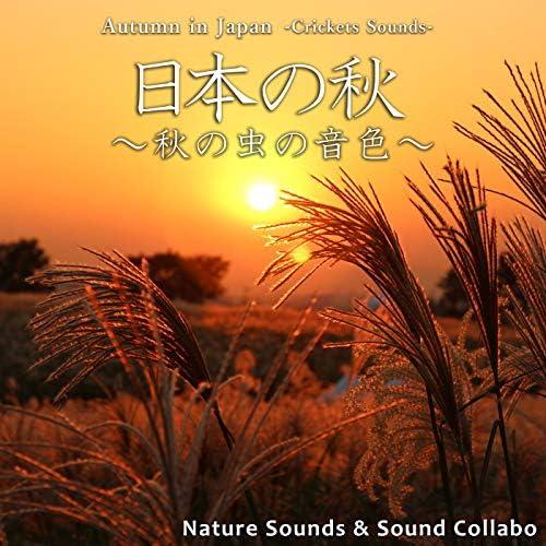 自然音 & サウンド・コラボ