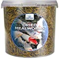 Sakana Dried Mealworms | Premium Quality Aquatic Pond Fish Food | High Protein & Energy, Balanced Diet Feed | Contains Nutritious Minerals and Vitamins | Easily Digestible, Year-Round Snack (2.5L) from Sakana