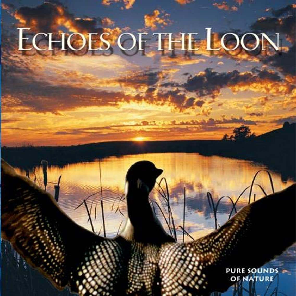 Echoes of the Loon