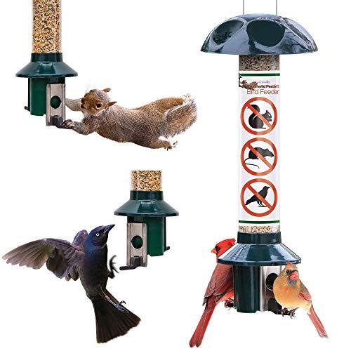 Roamwild Squirrel Proof Wild Bird Feeder Mixed Seed Sunflower Heart Version - GREEN - 3LBS SEED...