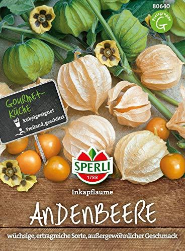 80640 Sperli Premium Physalis Samen Inkapflaume | Vitaminreich | Wüchsig | Ertragreich | Physalis Saatgut | Andenbeere