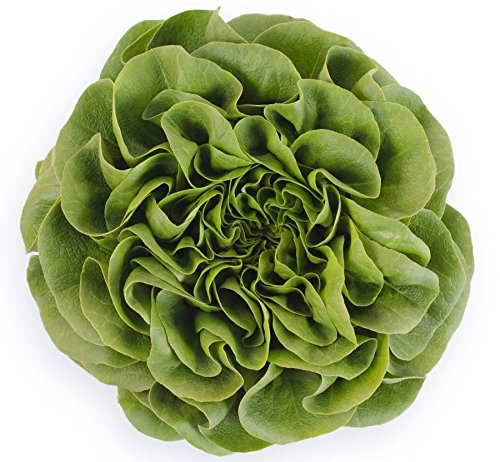 Just Seed???Bio???Multi-leaf Laitue???Salanova???Descartes RZ (79?154)???1000?graines de pilules