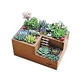 liuxi Holz Pflanzgefäß Box, saftigen Pflanzer Kindergarten Pflanze Desktop Kleine Sachen Aufbewahrungsbox