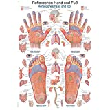 Erler Zimmer anatomische Lehrtafel, Reflexzonen Hand und