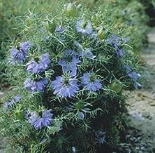 Nigella Miss Jekyll Sky Blue Annual Seeds