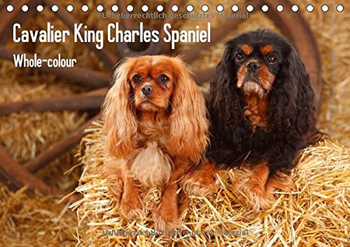 Whole-colour Cavalier King Charles Spaniel (Tischkalender 2015 DIN A5 quer)