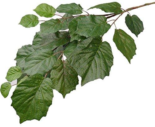 kunstpflanzen-discount.com Lindenblatt Zweig, schwer entflammbar mit 25 Blätter, Länge 75cm - künstliche Zweige Line Linden Blatt