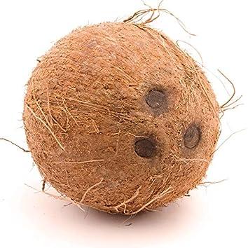 Coconut Riddim (feat. Maestro Garofalo)