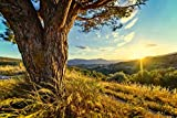 Zopix Poster Sonnenuntergang Abendstimmung Wandbild -