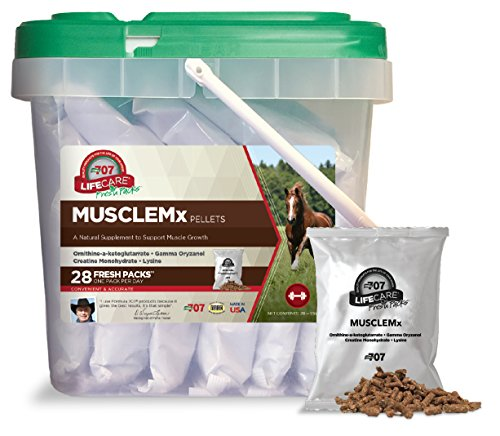Best Muscle Builder Supplements
